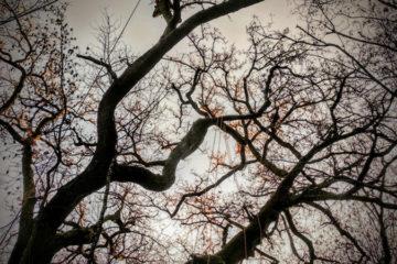 Corso treeclimbing avanzato