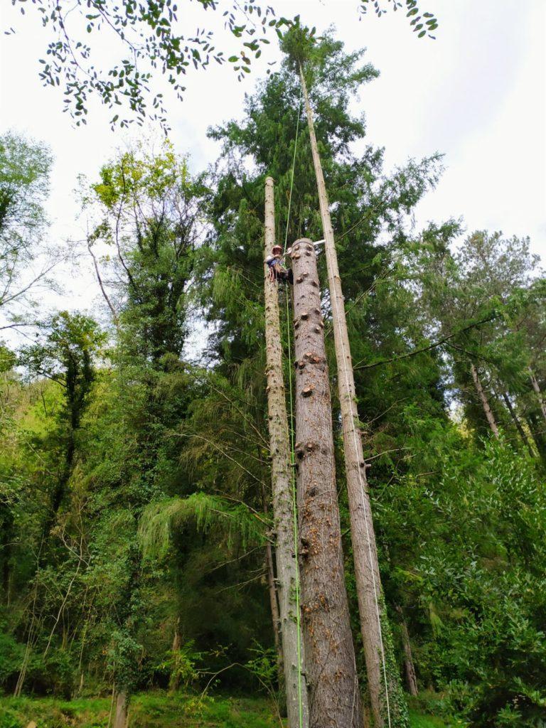 abbattimento alberi toscana