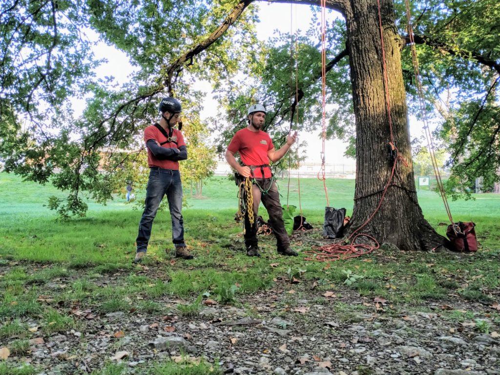 corso di treeclimbing toscana
