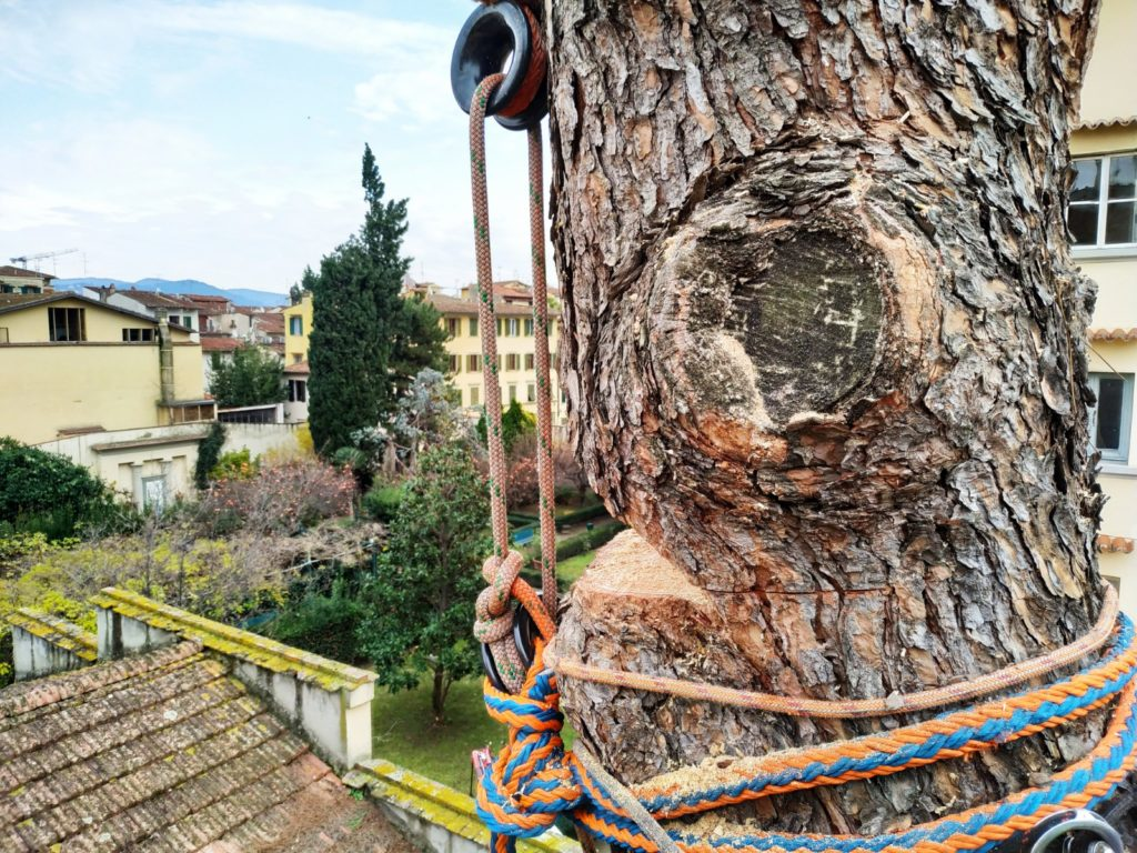treeclimbing abbattimento controllato
