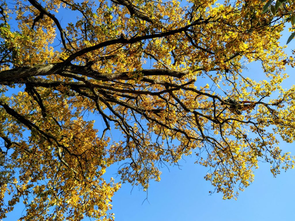 potatura grandi alberi a Firenze