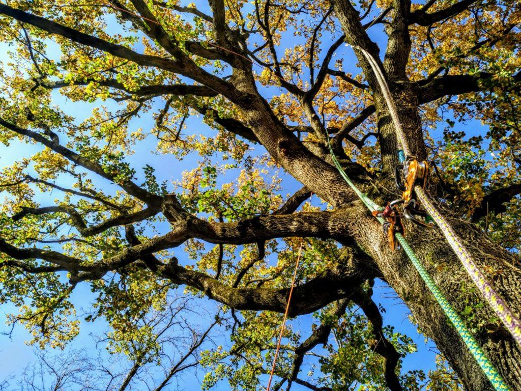 alberi e corde