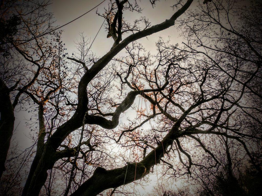 potatura quercia