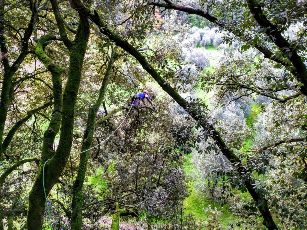 Treeclimbing Firenze 1