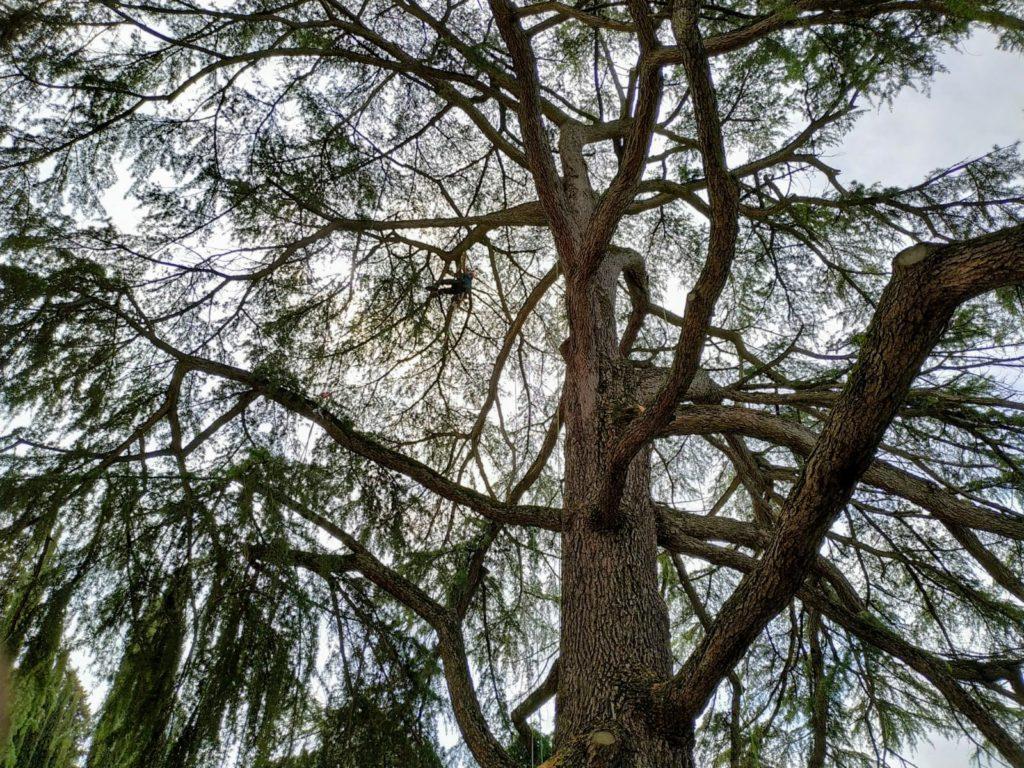 potatura alberi in treeclimbing