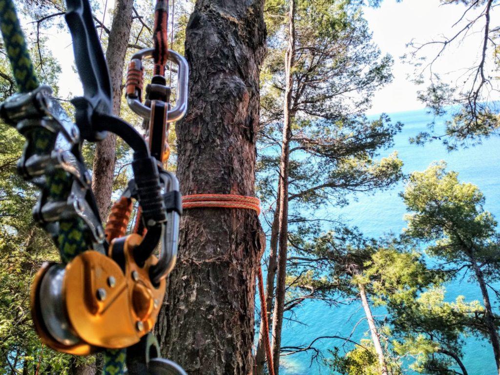 abbattimento in treeclimbing
