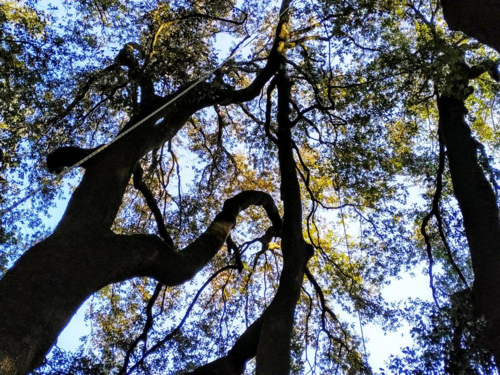 Alberi Ad Alto Fusto Quali Sono potatura alberi ad alto fusto a firenze - tobias pelli