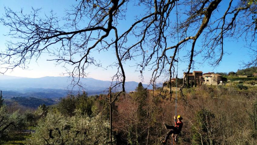 Potatura alberi alto fusto a Firenze