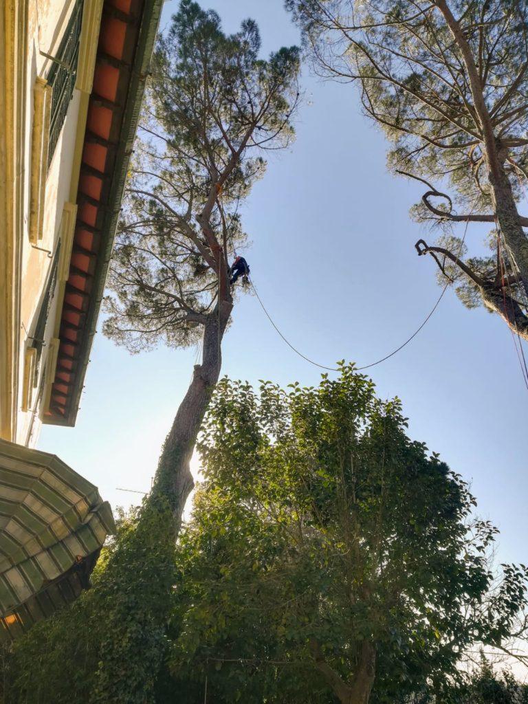 abbattimento alberi alto fusto Firenze