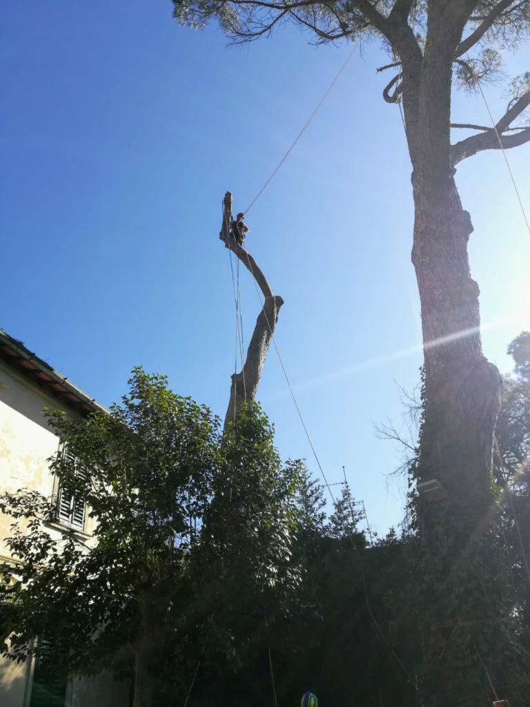 abbattimento alberi alto fusto