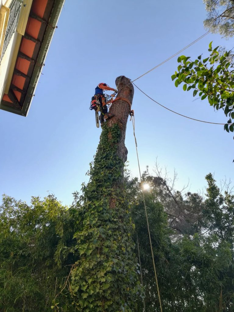 abbattimento controllato treeclimbing