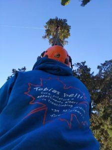 abbattimento alberi Firenze