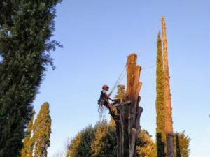 abbattimento cipressi Firenze