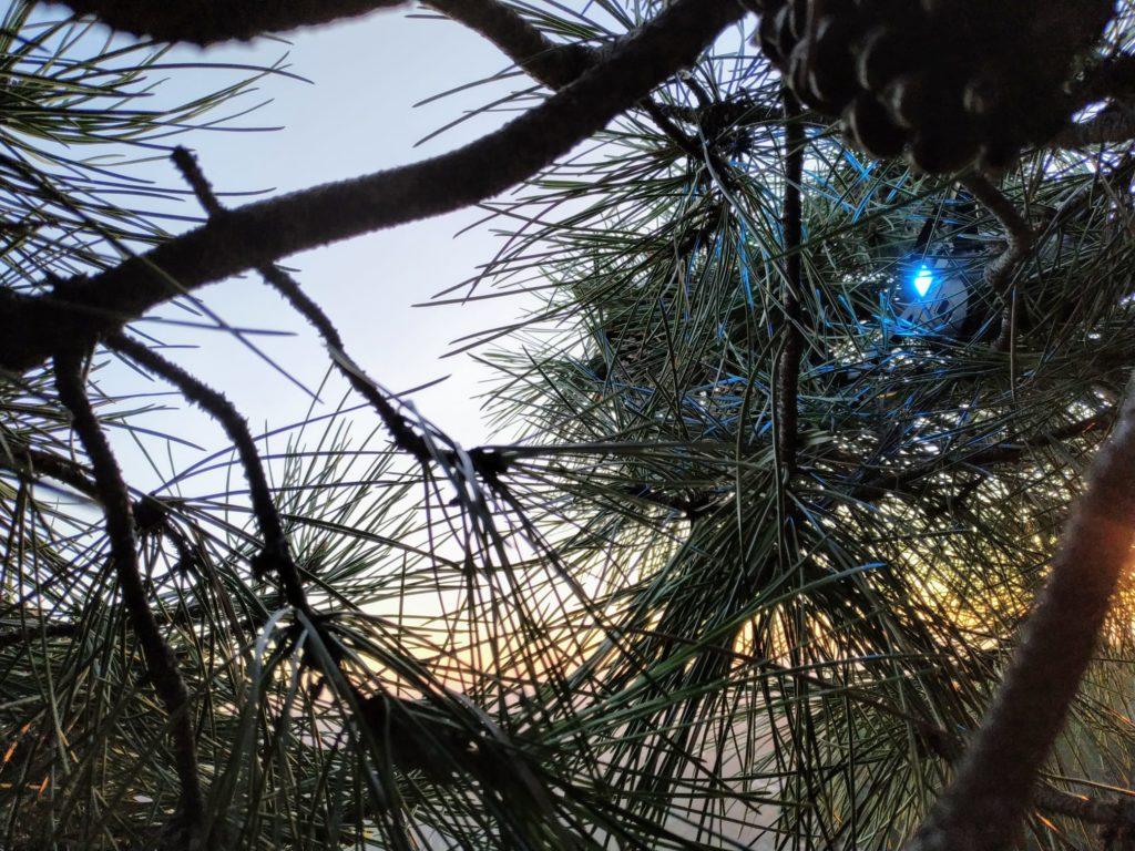 recupero drone su alberi