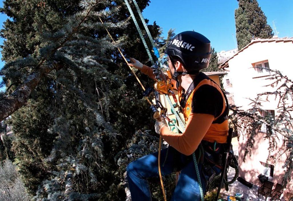 treeclimbing firenze 2