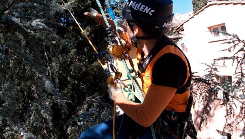 Treeclimbing Firenze
