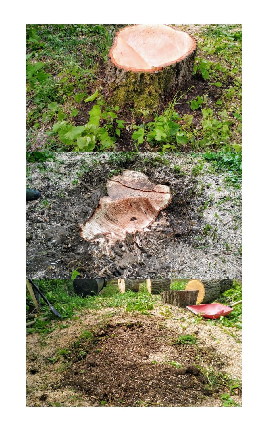 Alberi Ad Alto Fusto Quali Sono fresatura ceppaie. tobias pelli abbattimento alberi a firenze
