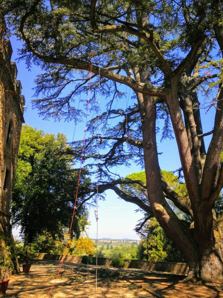 potatura cedri firenze treeclimber
