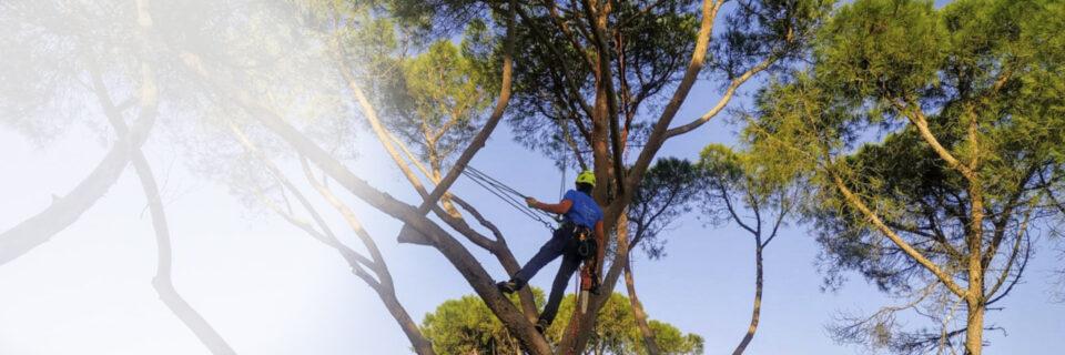 in Treeclimbing