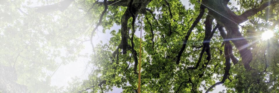 Corsi di Formazione News sul Treeclimbing