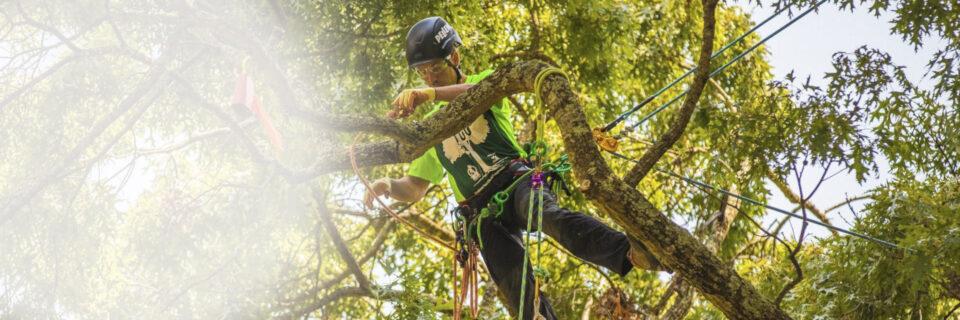 Campione Italiano Treeclimbing 2016 - 2018 - 2019