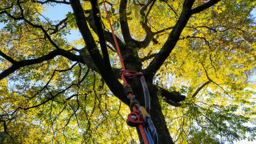 potatura alberi firenze