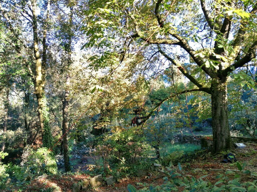 potatura alberi Firenze 3